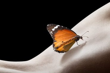 Butterfly on a naked womens back